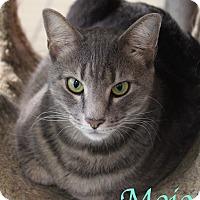Adopt A Pet :: Mojo - Bradenton, FL