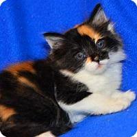 Adopt A Pet :: Martha - Buford, GA