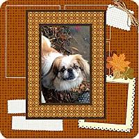 Adopt A Pet :: Max (in Maine) - Vansant, VA