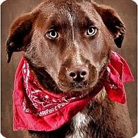 Adopt A Pet :: Stripe - Owensboro, KY