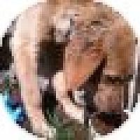 Adopt A Pet :: Jake - Denver, CO