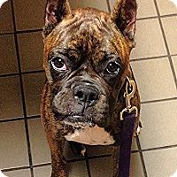 Adopt A Pet :: Tulsa - Hudson, NH