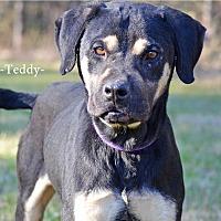 Shepherd (Unknown Type)/Chow Chow Mix Dog for adoption in Washington, Georgia - Teddy