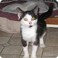 Adopt A Pet :: Picasso - Kirkwood, DE