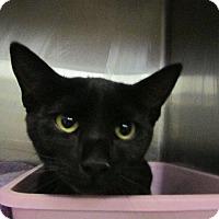 Adopt A Pet :: Agatha - Grand Junction, CO