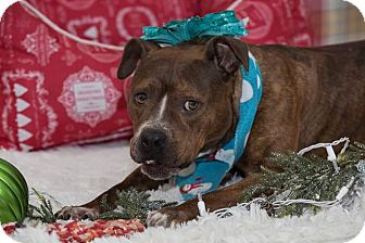 Terrier (Unknown Type, Medium) Mix Dog for adoption in Flint, Michigan - Talisha - Rescued