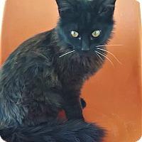 Adopt A Pet :: Brent - Umatilla, FL