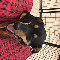Adopt A Pet :: Nick Fury - Midland, TX