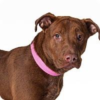 Terrier (Unknown Type, Small) Dog for adoption in Waycross, Georgia - Izzy