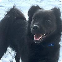 Adopt A Pet :: Lexi - Newtown, CT