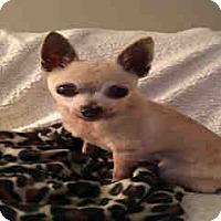 Adopt A Pet :: Rex - Morgan Hill, CA