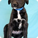 Adopt A Pet :: Foxglove