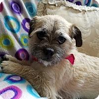 Adopt A Pet :: Shilo - Monrovia, CA