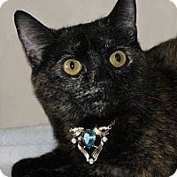 Adopt A Pet :: Liz Taylor - Rochester, NY