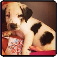 Adopt A Pet :: Luna - Wilmington, MA