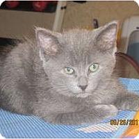 Adopt A Pet :: Ashton - Sterling Hgts, MI