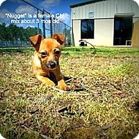 Adopt A Pet :: Nugget - Gadsden, AL