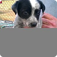 Adopt A Pet :: Sophie - Conway, AR