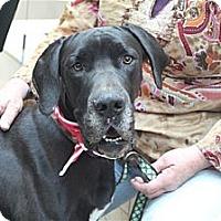Adopt A Pet :: Molly  *Adopted - Tulsa, OK