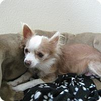 Adopt A Pet :: Janie - Bonita, CA
