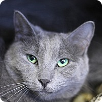 Adopt A Pet :: Lupe Guadalupe - Chicago, IL