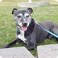 Adopt A Pet :: Keira - Cedar Rapids, IA