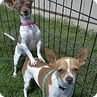 Adopt A Pet :: Hope - Meridian, ID