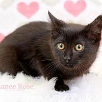 Adopt A Pet :: Zuri - Sterling Heights, MI