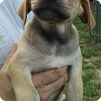 Adopt A Pet :: Campbell - Richmond, VA