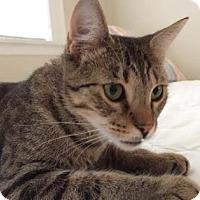 Adopt A Pet :: Musashi - New York, NY
