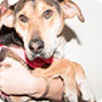 Adopt A Pet :: Cricket - Pompton Lakes, NJ