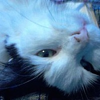 Adopt A Pet :: Mattie - $25 Adoption Fee - Pekin, IL