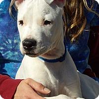 Adopt A Pet :: Blaze (15 lb) Video! - Williamsport, MD