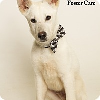 Adopt A Pet :: Romulus (Foster Care) - Baton Rouge, LA