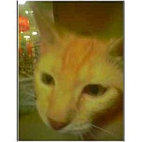 Adopt A Pet :: Sprite - Owasso, OK