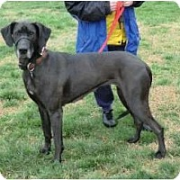 Adopt A Pet :: Dixie - Hanover, MD