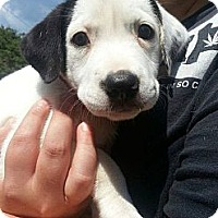 Adopt A Pet :: Addie - WARREN, OH
