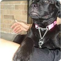 Adopt A Pet :: Malaki - Plano, TX