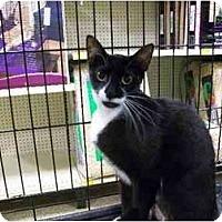 Adopt A Pet :: Maxine - Orlando, FL