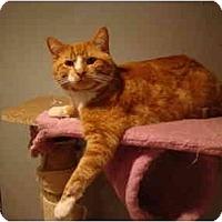Adopt A Pet :: Moe--PETSMART - Muncie, IN