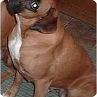 Adopt A Pet :: Suki - Thomasville, GA