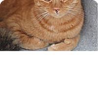 Adopt A Pet :: Otis - El Cajon, CA