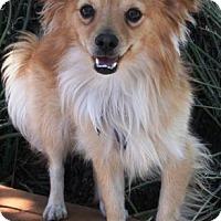 Adopt A Pet :: Floki - Gilbert, AZ