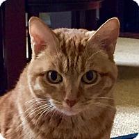 Adopt A Pet :: Zoey - Laguna Woods, CA