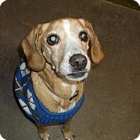 Adopt A Pet :: Bruiser - Geneseo, IL