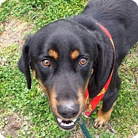 Adopt A Pet :: Jaxson - Franklin, VA