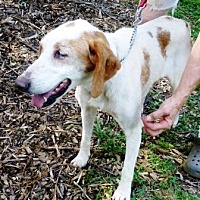 Adopt A Pet :: Lucy - Charlottesville, VA
