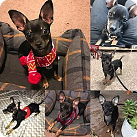 Adopt A Pet :: Mickey - Yuba City, CA