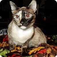 Adopt A Pet :: Equinox - O'Fallon, MO