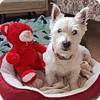 Adopt A Pet :: Fairlane - Encinitas, CA